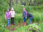 Clearing Garlic Mustard