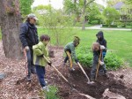 Planting the tree 3
