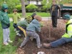 Planting the tree 4