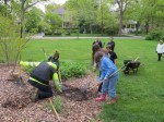 Planting the tree 1