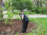 Spreading Mulch 1