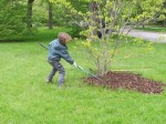 Spreading Mulch 2