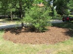 Mulched areas (1)