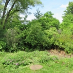 Lecture:  Bird Friendly Gardens and Landscapes