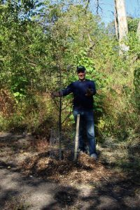 Planted Trees (4) (2)
