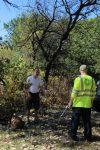 Planting Black Oaks