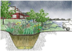 Home Rain Garden Discussion Panel