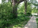 Tributes & Trees Program